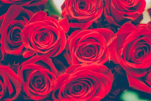 Free stock photo of love, romantic, flowers, petals