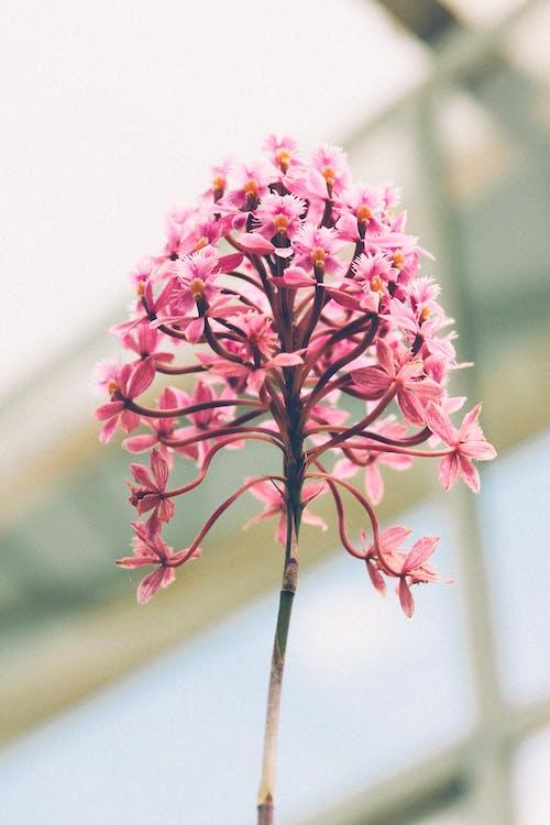 Darmowe zdjęcie z galerii z flora, jasny, kolor, kolorowy