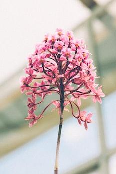 Desktop background of nature, petals, colourful, plants