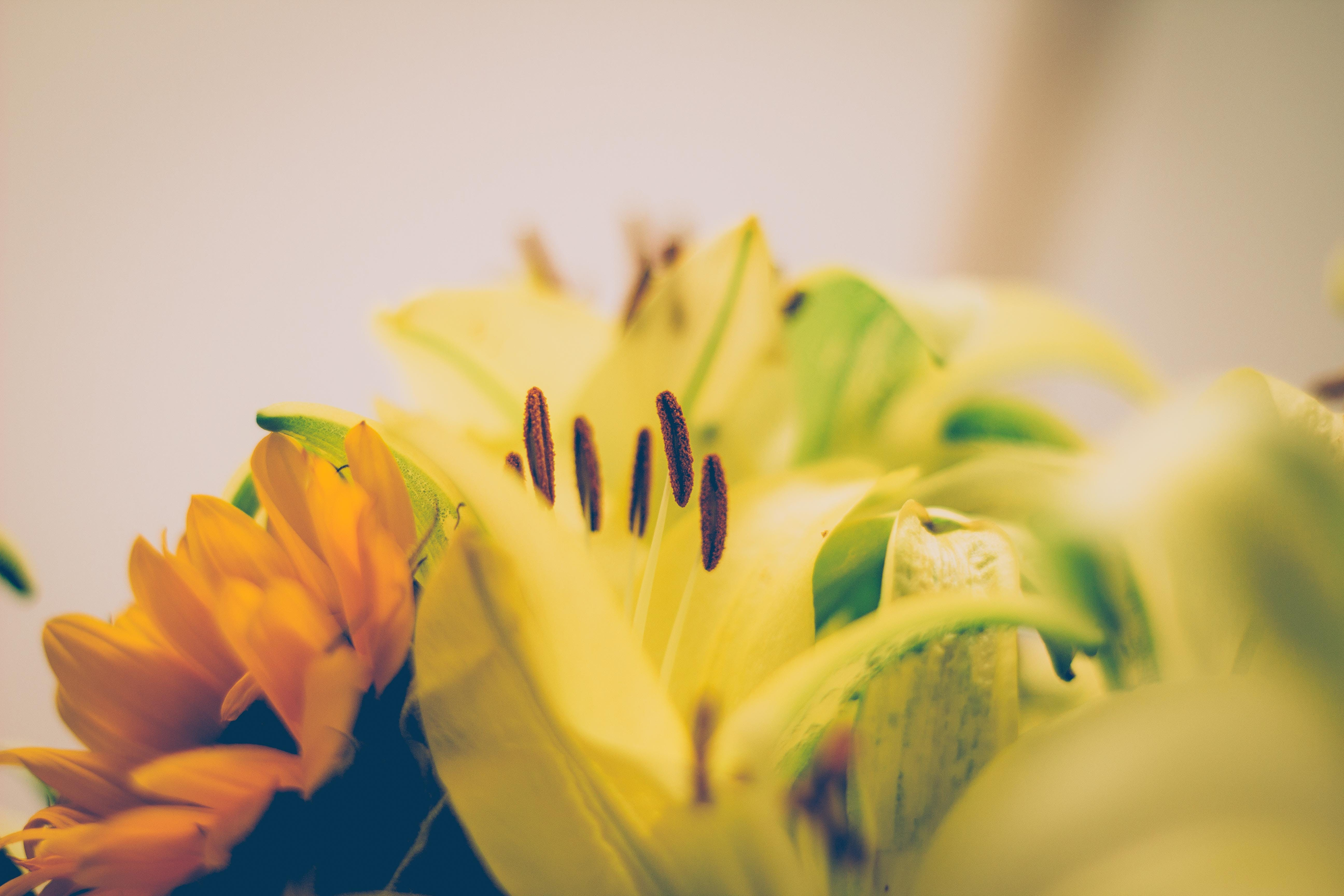 Free stock photo of nature, yellow, flower, natural