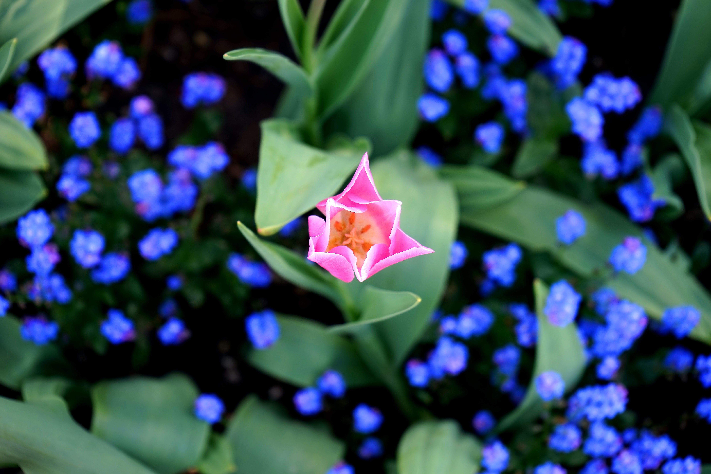 Gratis stockfoto met bloeien, bloeiend, bloemblaadjes, bloemen