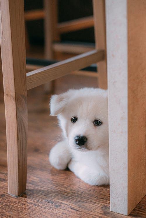 White Puppy on Brown Wooden Frame