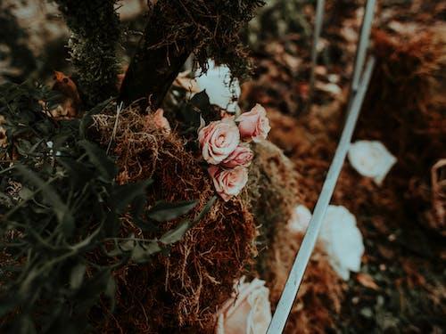 Immagine gratuita di ambiente, arredamento, autunno