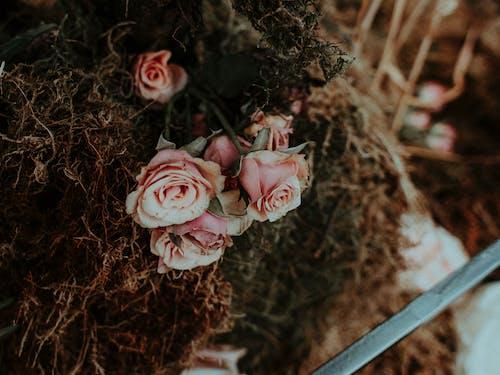 Ảnh lưu trữ miễn phí về cánh hoa, cuộc sống tĩnh lặng, đẹp, gỗ