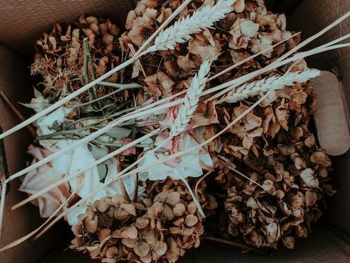 Kartonnen Doos Met Gedroogde Bloemen En Planten