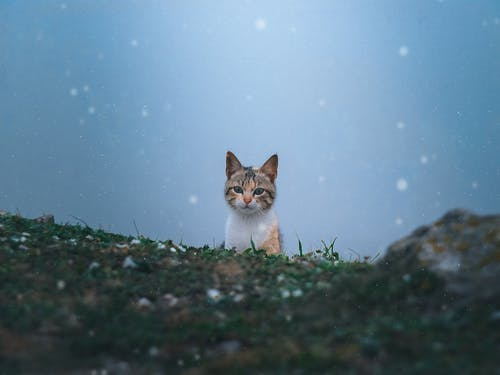 Ilmainen kuvapankkikuva tunnisteilla eläimen muotokuva, eläin, eläinkuvaus