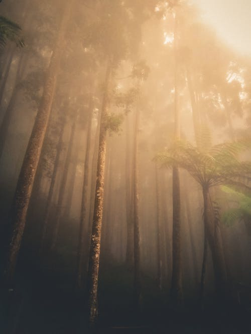 Kostnadsfri bild av botanik, dimma, dimmig