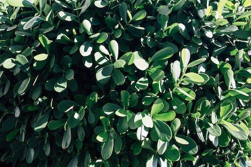 Gratis stockfoto met achtergrond, blad, bladeren, bloemachtig