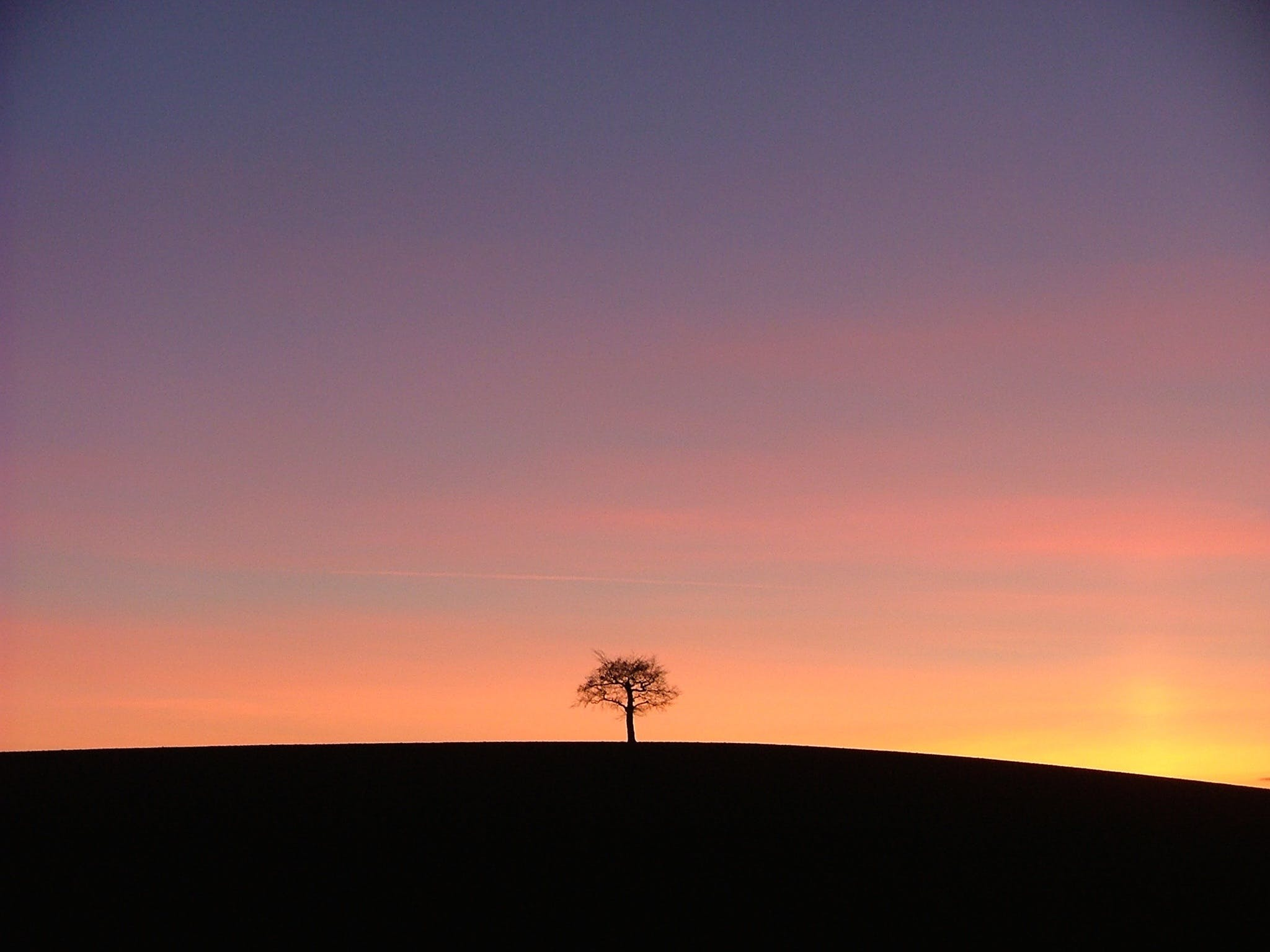 Silhouette of a Tree
