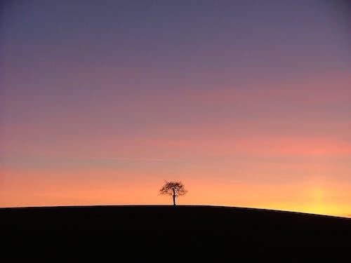 Imagine de stoc gratuită din amurg, arbore, cer, contur