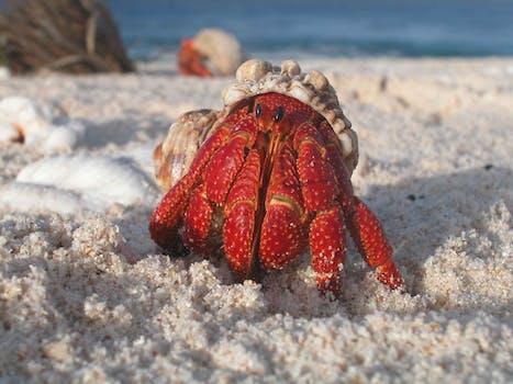 Yellow and White Crab on White Sand Beach during Daytime ...