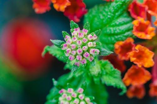 Darmowe zdjęcie z galerii z flora, kwiat, kwitnąć, makro