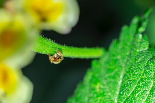 Darmowe zdjęcie z galerii z głębia pola, liść, mały, pająk