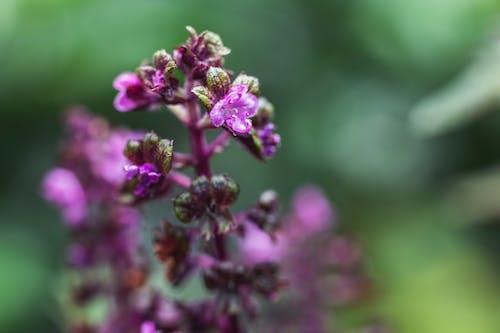 Darmowe zdjęcie z galerii z delikatny, dziki, flora, jasny