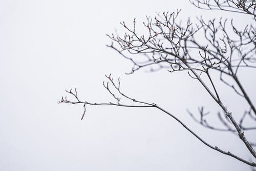 Leafless tree branches in winter forest