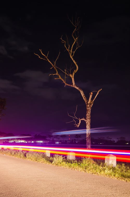 トレース, 光, 木の無料の写真素材