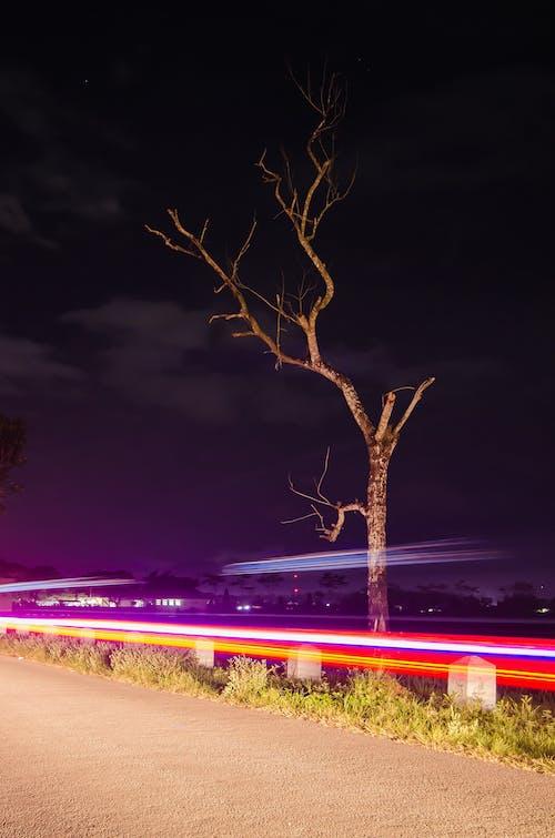 Free stock photo of light, trace, tree