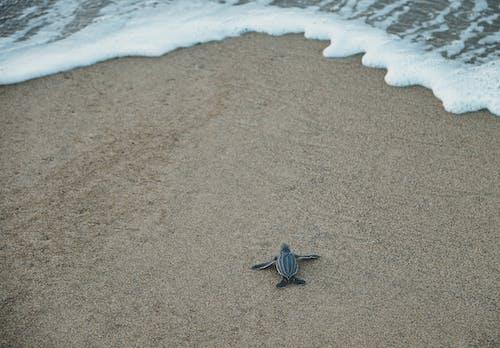 Black and Gray Sea Turtle on Brown Sand