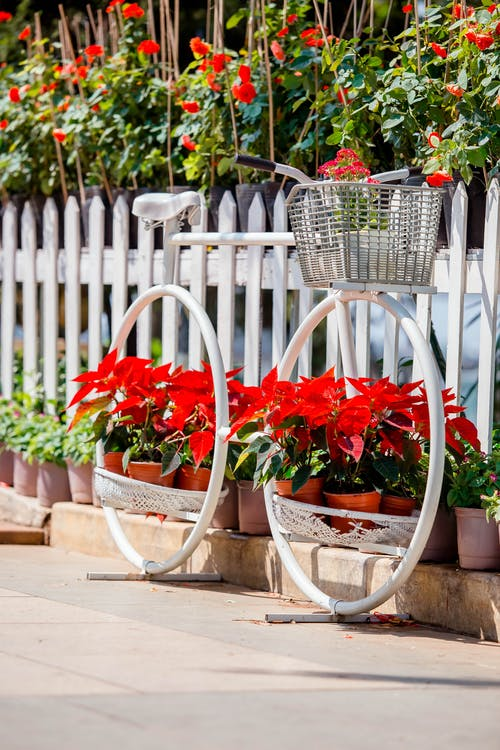Red Flowers on Brown Clay Pots Beside A Bicycle Frame
