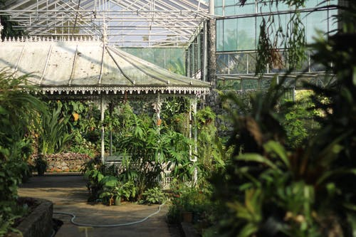 Free stock photo of botanic garden, botanical, botanical garden