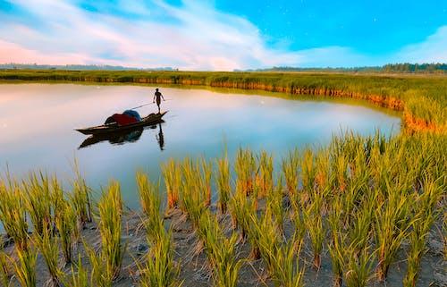 Ảnh lưu trữ miễn phí về bình minh, bóng, cánh đồng lúa
