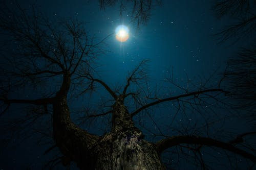 Free stock photo of branches, dark, low light, moon