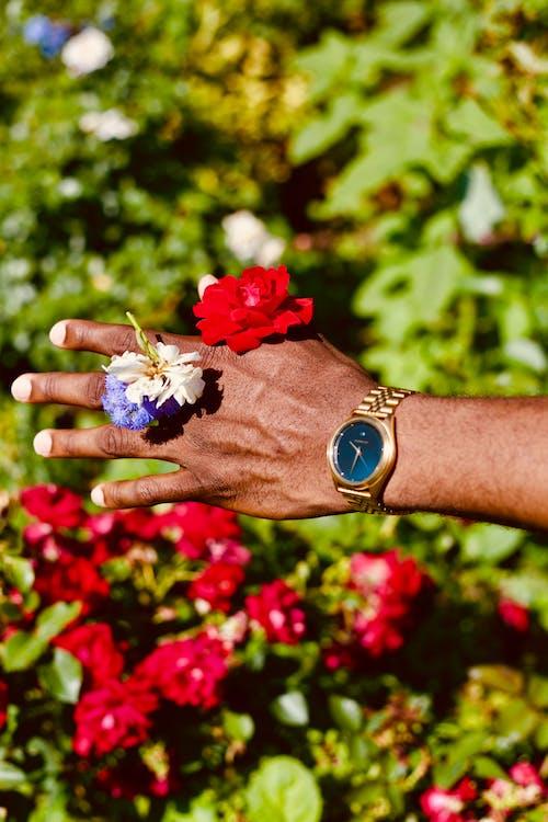 계절, 고요한, 깨지기 쉬운, 꽃의 무료 스톡 사진