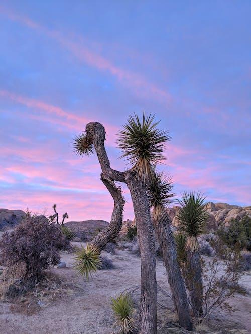Free stock photo of california, desert, dream, hike