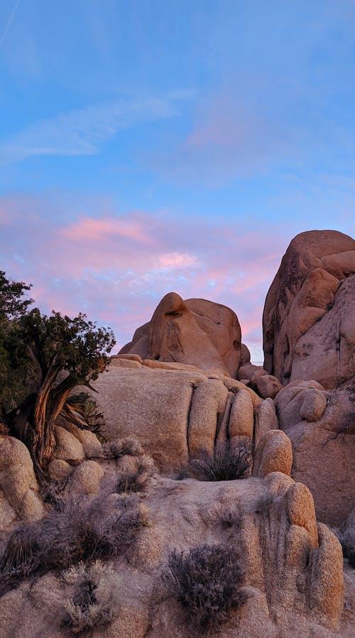 Free stock photo of california, camping, Cotton candy, joshua tree