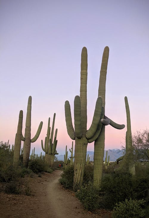 Free stock photo of america, arizona, cactus
