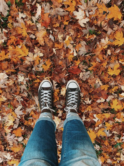 Person in Blue Denim Jeans and Sneakers Converse Standing on Dried Leaves