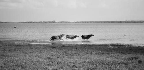 Kostenloses Stock Foto zu safari