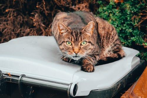 Free stock photo of cat, Meow, pet