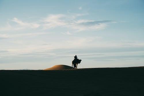 Gratis stockfoto met Arabische kameel, dageraad, duinen, kameel
