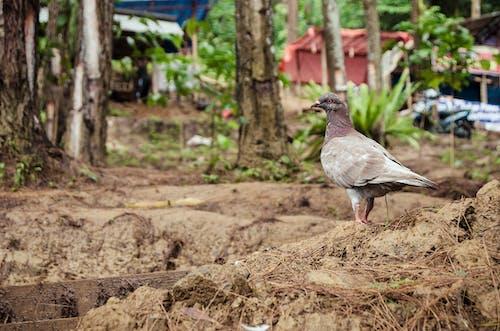 動物, 歩いて, 鳥の無料の写真素材
