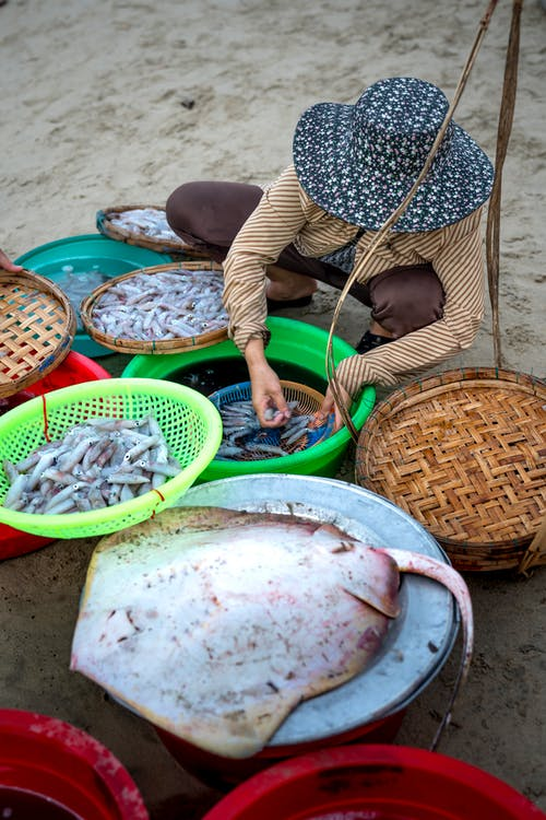 From above full body faceless person wearing casual outfit and hat cleaning shrimps in basins while working in Asian street seafood market