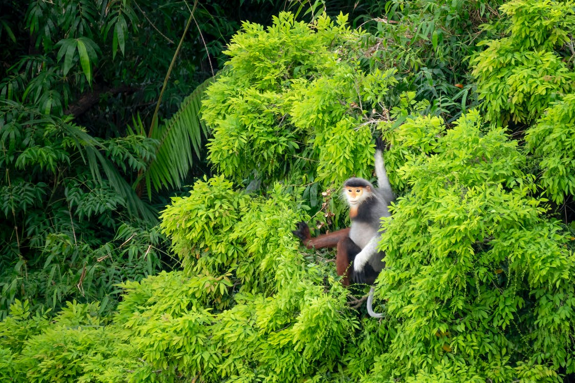 Black and White Monkey on Green Tree