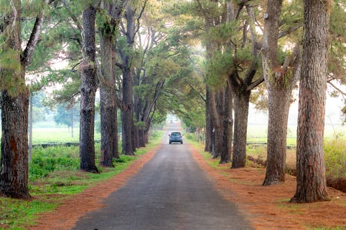 Photo Of Road Between Trees During Daytime