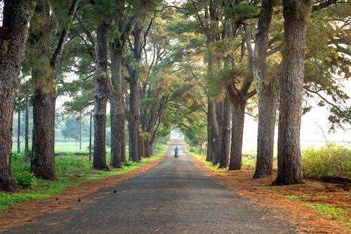 Безкоштовне стокове фото на тему «вказівки, гілки, гілки дерев»
