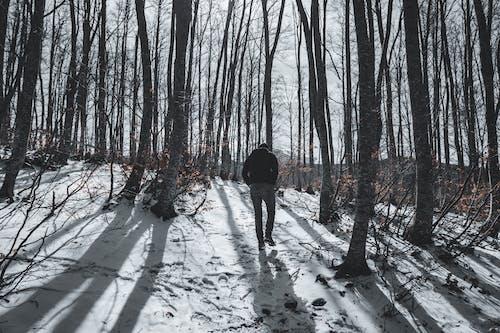 Imagine de stoc gratuită din anotimp, arbori, codru