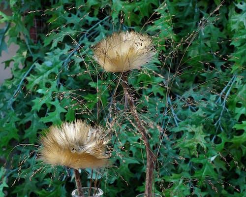 Imagine de stoc gratuită din floare frumoasa