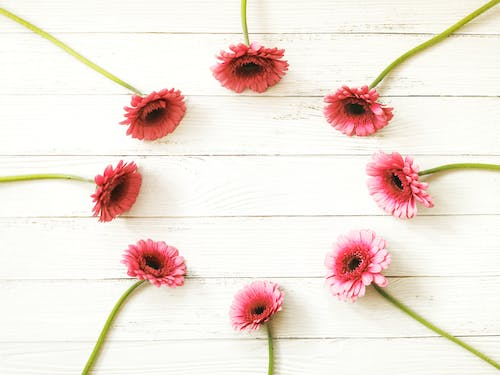 Fragile pink flowers placed on wooden table