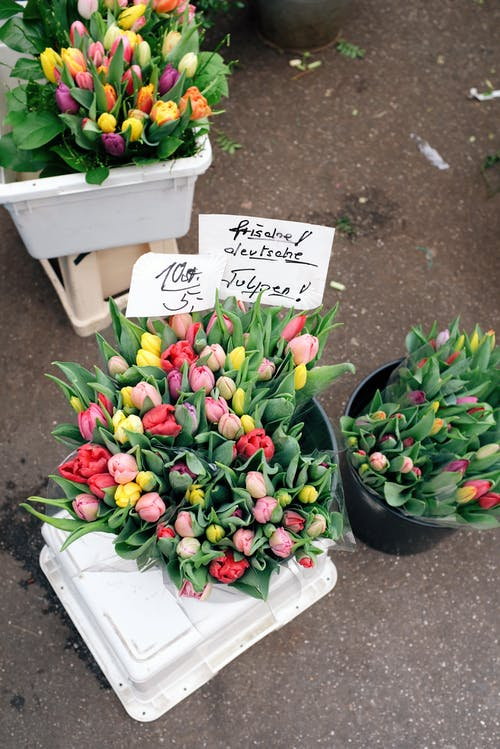 Variety Of Tulips In A Pail