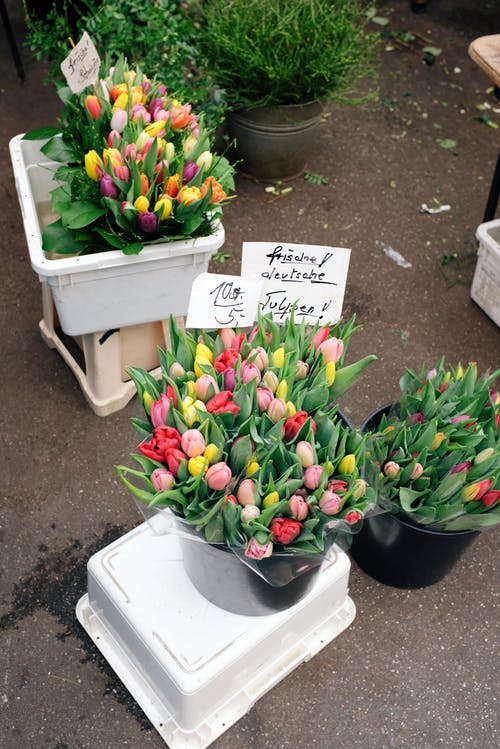 Assorted Tulips In Black Pails
