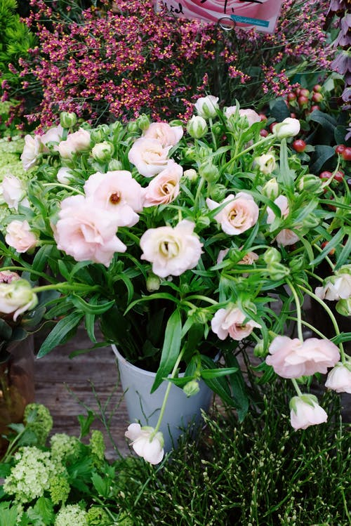 White and Pink Flowers In A Pot