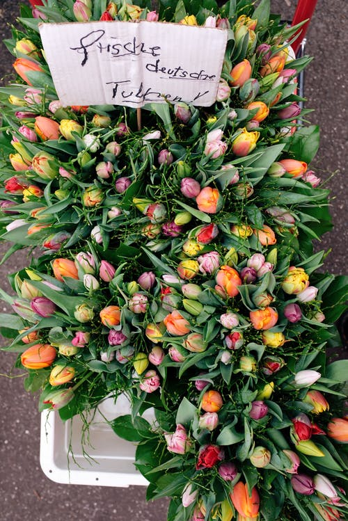 Clusters Of Tulip Flowers With Green Leaves