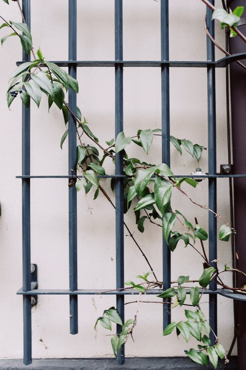 Green Plant on Gray Iron Fence