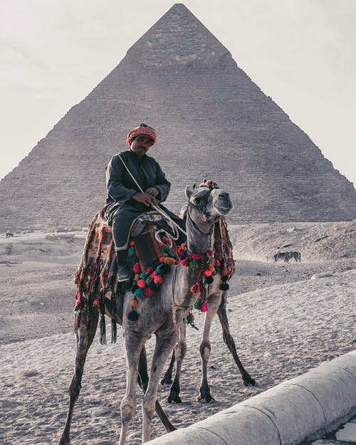 Full length of Arab male tour guide in casual outfit and headwear sitting on camel against famous Pyramid of Cheops in Cairo Egypt during hot day