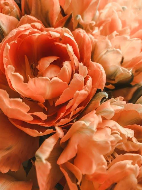 宏觀照片, 明亮, 植物群, 橙花 的 免費圖庫相片