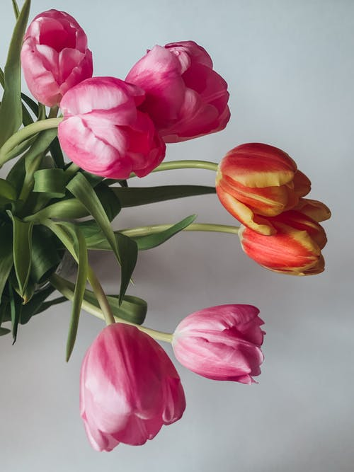 Photo of Tulips Flowers